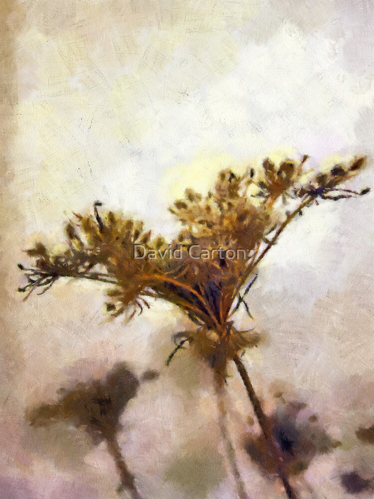 Dried flower art by David Carton