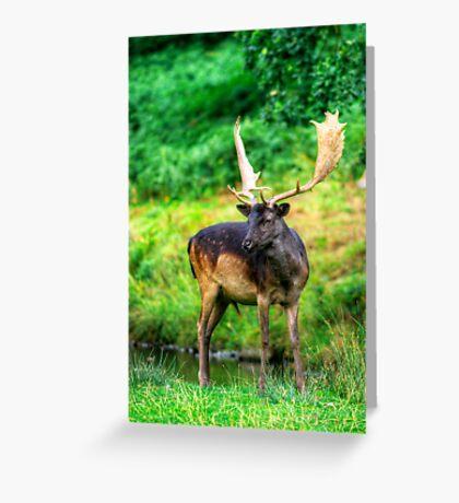 Fallow Deer 4.0 Greeting Card