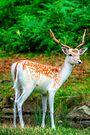 Fallow Deer 5.0 by Yhun Suarez