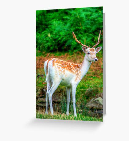 Fallow Deer 5.0 Greeting Card