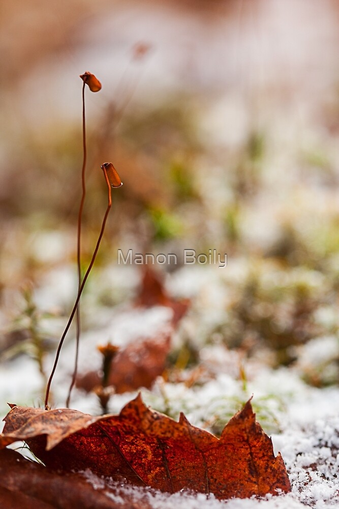 first trace of winter by Manon Boily
