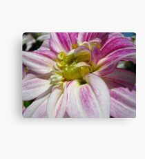 Flowers for the Breast Cancer  Canvas Print