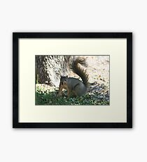 Squirrell Framed Print