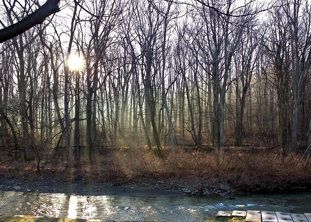 Morning Fog near a Creek by chelseysue