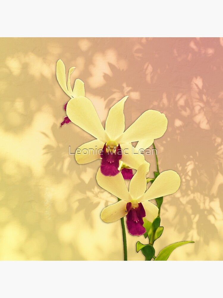 Purple Exotic Orchid with Shadows by yallmia