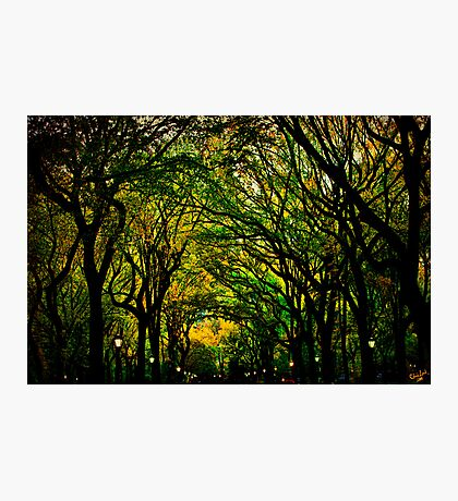 The Mall In Fall Photographic Print
