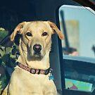 Designated Driver by Susie Peek