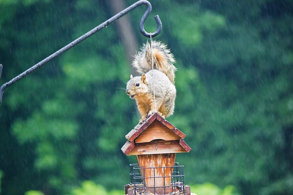 Squirrel Eating in the Rain 2 by chelseysue