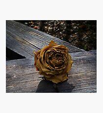 Twilight Rose Photographic Print