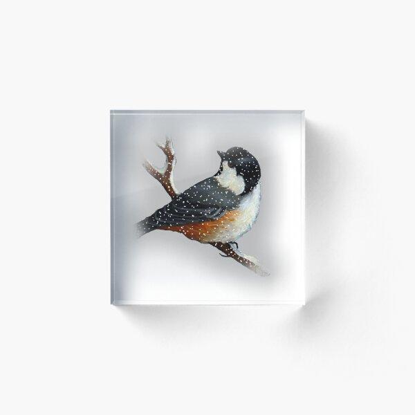 Chickadee in  Snow, Original Art, Wildlife Art, Bird in Winter Acrylic Block