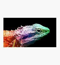 Bearded Dragon -  Rainbow Dragon Photographic Print
