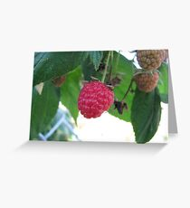 A Late Raspberry Greeting Card
