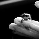 Salamander by VanLuvanee21