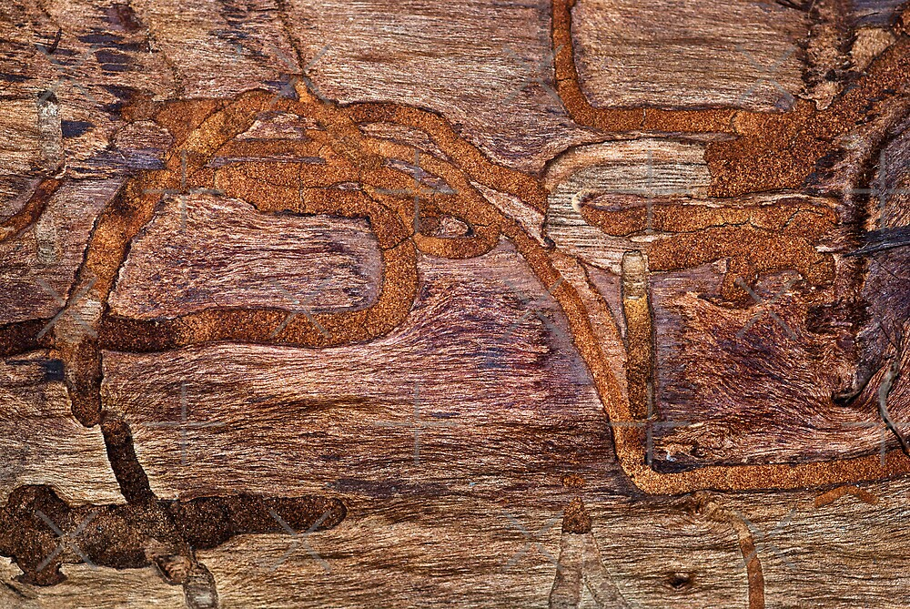Termite Racetrack by Scott  Cook©