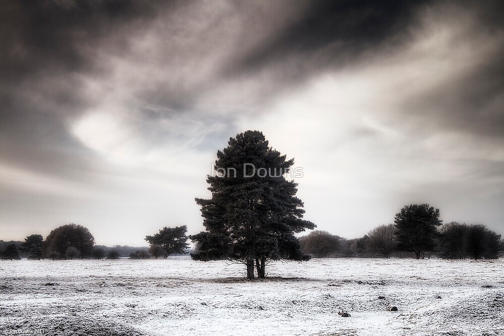 Winter in Elveden by Jon Downs
