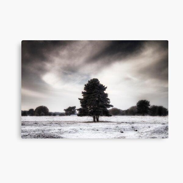 Winter in Elveden Canvas Print