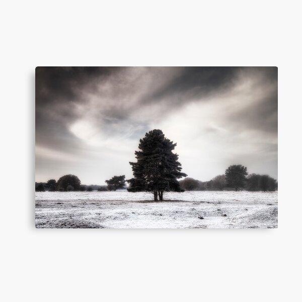 Winter in Elveden Metal Print