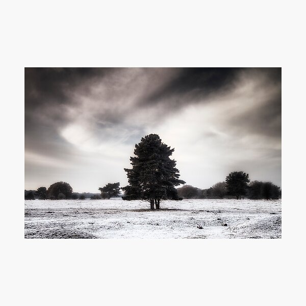 Winter in Elveden Photographic Print
