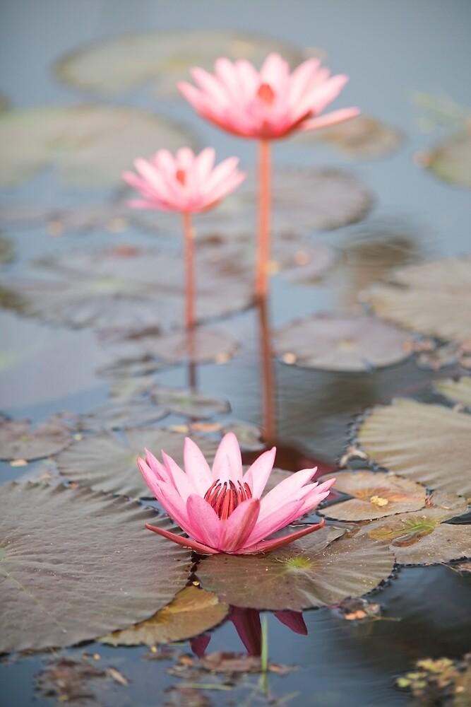 Lotus by Maria Heyens