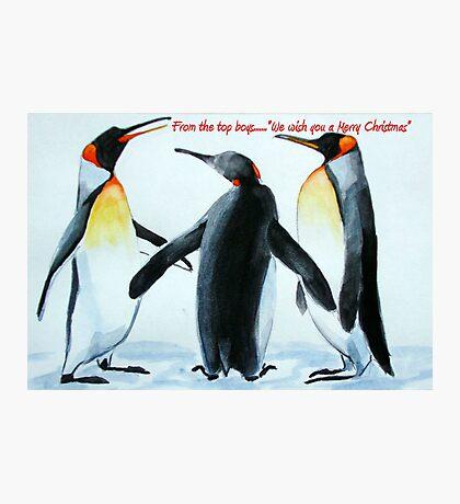 Singing Penguins Photographic Print