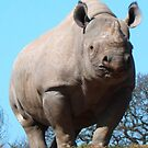 A Rhino Looking At Me by IvanGore