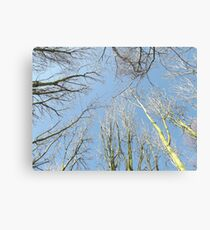 Looking Up Through Tree Tops Canvas Print