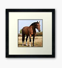 Bay Gelding Framed Print