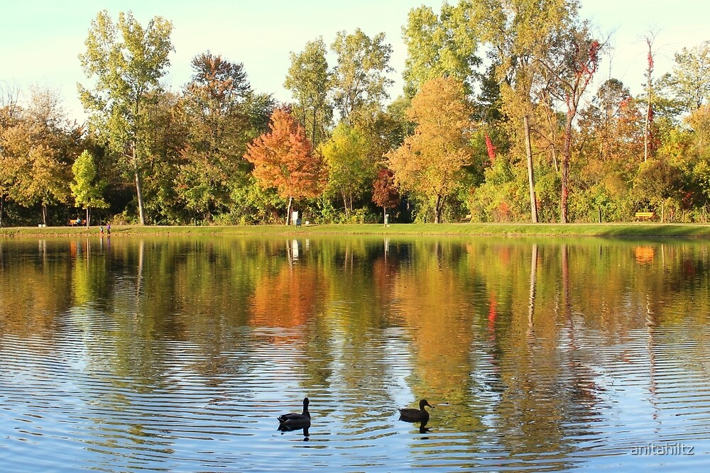 Fall Colors Reflecting In Pond With Ducks by anitahiltz