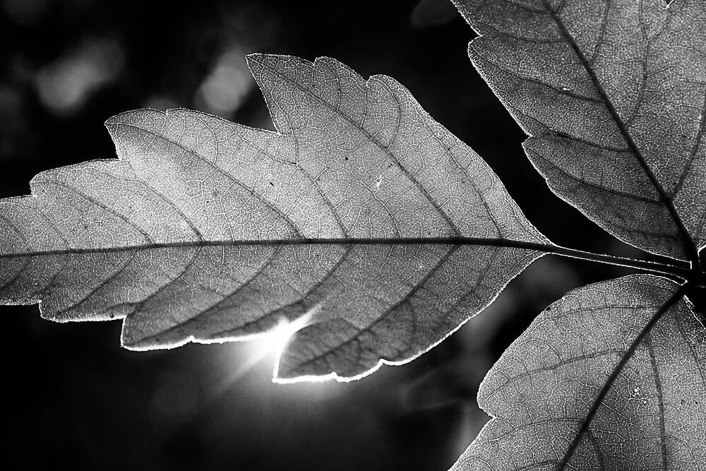 Mono Leafclipse by Bob Larson