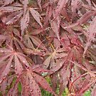 Vibrant Wet Leaves by IvanGore