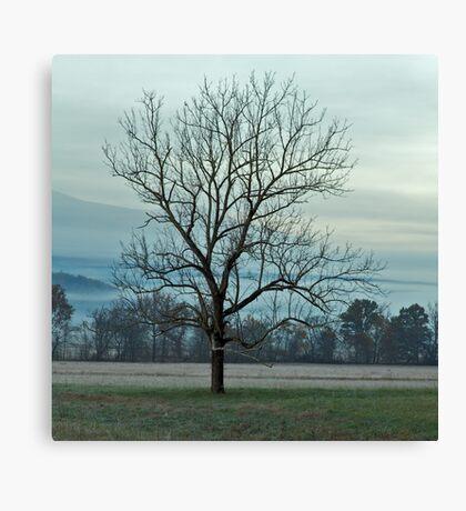 The Loner Canvas Print