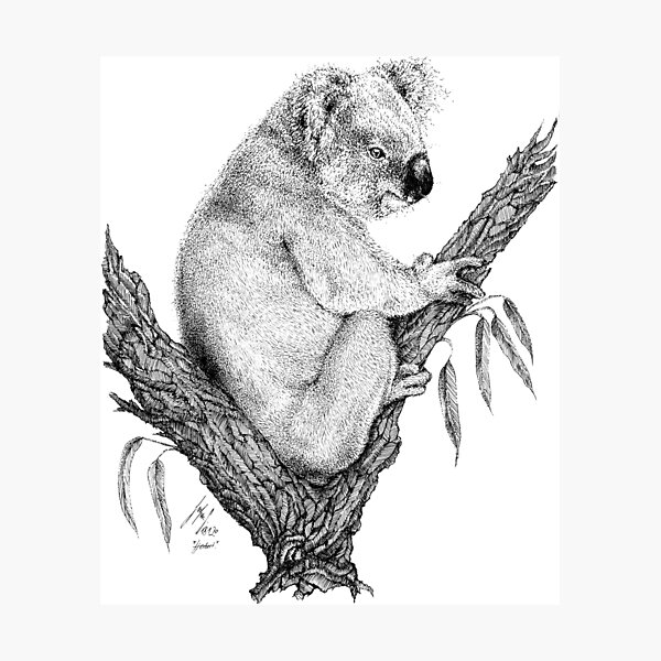 Happy koala bear sitting in eucalyptus tree black and white Photographic Print