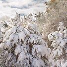 Winter Wonderland  by Bo Insogna
