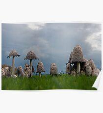Ink cap mushrooms Poster