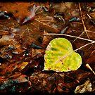 Fragile Heart by Lynnette Peizer