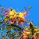 Flowers In The Sky by Jeri Garner