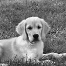 Puppy Love by Jeri Garner