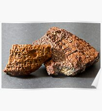 Fossils in Limeonite Poster