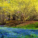 Spring Layers by cclaude
