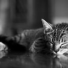 Kitten dreaming by johnwheat