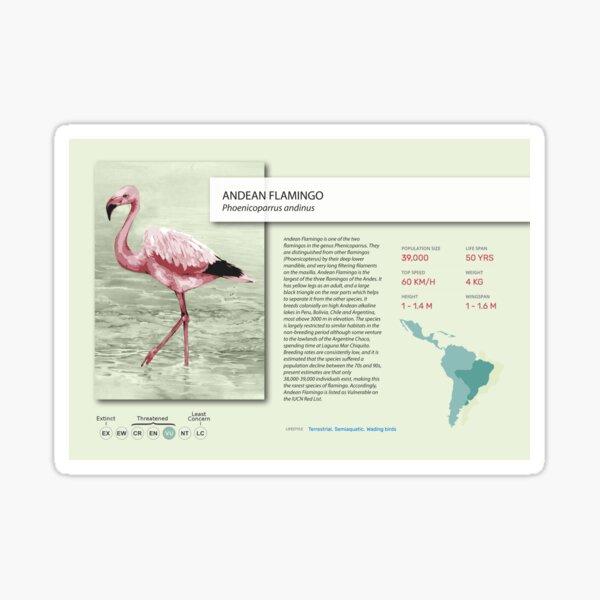 Flamingo Poster Sticker