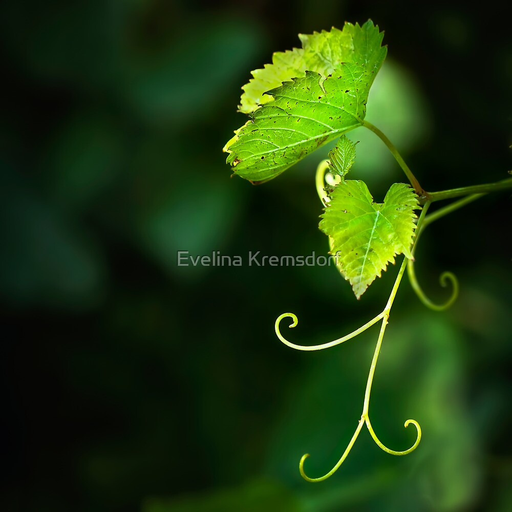 Memories Of Green by Evelina Kremsdorf