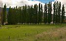 Hop Country near Molesworth by Odille Esmonde-Morgan