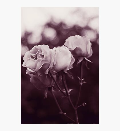 Tell me whom you love and I'll tell you who you are Photographic Print