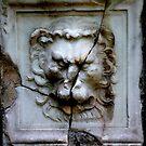 Lion Plate by Ulf Buschmann