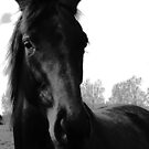 Dark Horse by Meg Hart