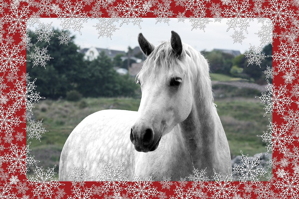 Connemara Pony Christmas Card - Type 3 by ConnemaraPony