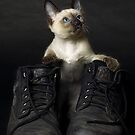 These Boots are Made for Scratchin' by billyboy