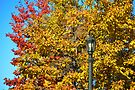 Lamp Post by Elaine Manley