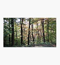 Kaona Wood - Six days later - 1 Photographic Print